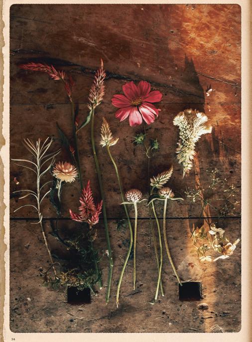 Katalog - Lena Hoschek - SS19 - Tradition - Bild-36