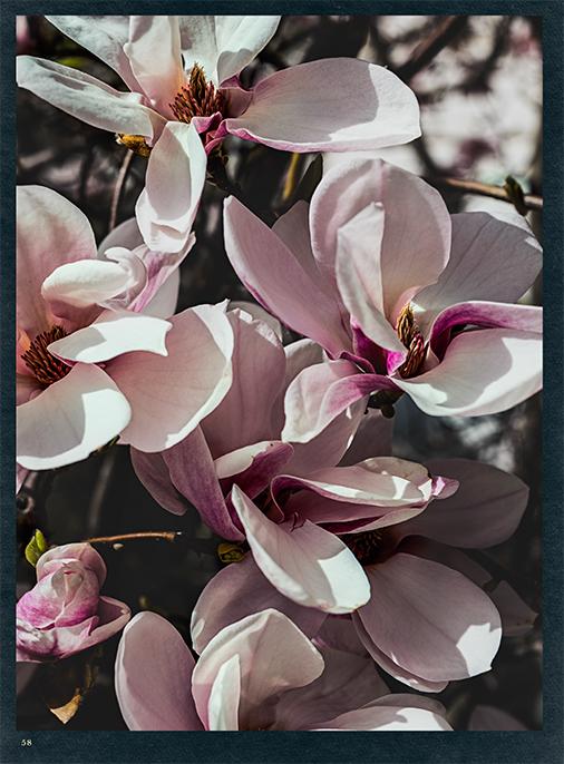 Katalog - Lena Hoschek - AW1819 - Wintergarden - Bild 58